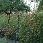 Plot s popínavými kytičkami
